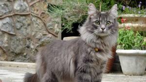 Image principale de l'article Un «kidnappeur de chats» dans Lebourgneuf?
