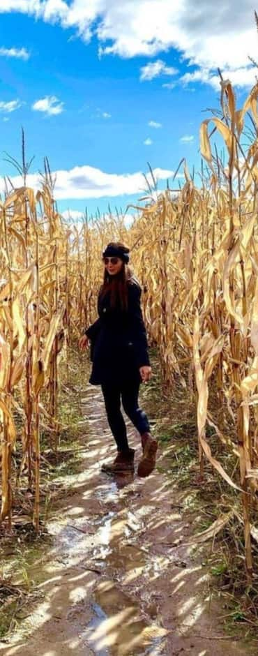 Image principale de l'article Un labyrinthe géant un verger près de Montréal