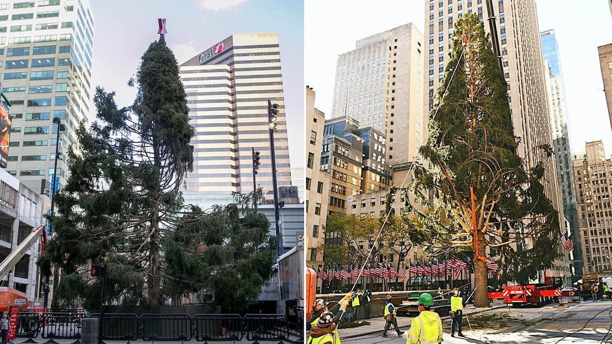 Les gros sapins de Noël de New York et Cincinnati sont ...