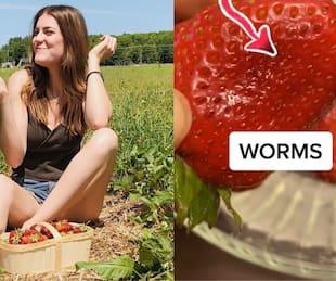 Image principale de l'article Ce TikTok dévoile des insectes dans les fraises