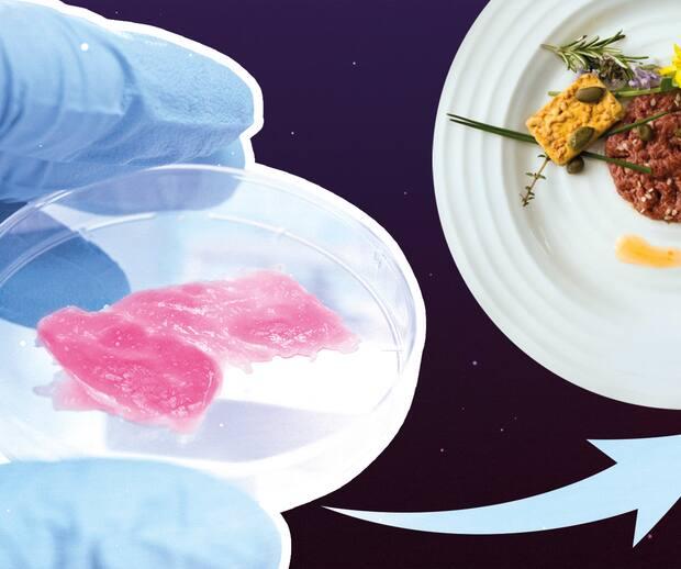 Image principale de l'article La viande de laboratoire, c'est pour quand?