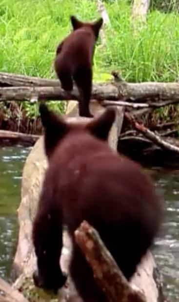 Image principale de l'article Il filme les animaux qui passent sur un billot