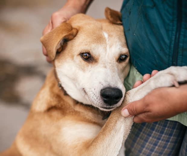 Image principale de l'article Une année désastreuse pour les animaux abandonnés