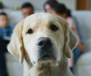 Image principale de l'article Films de chien : 7 bons films à écouter en famille