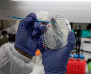 Un scientifique travaille sur un vaccin dans un laboratoire de l'Institut de recherche Migal Galilée, en Israël.