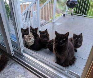 Image principale de l'article Une chatte errante surprend une Montréalaise