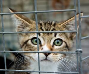 Image principale de l'article Un kidnappeur de chats à Québec?