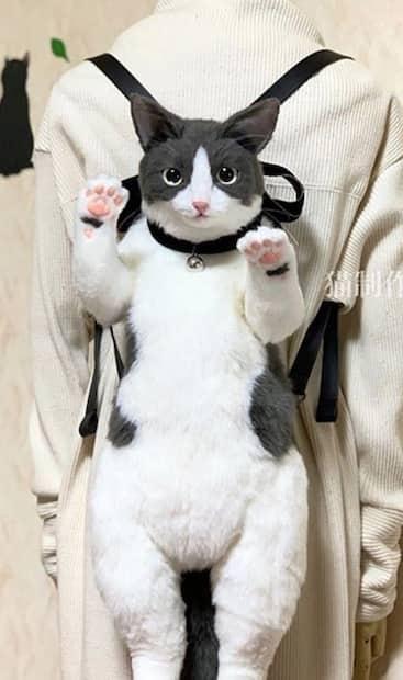 Image principale de l'article Les sac-chats font fureur au Japon