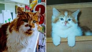 Image principale de l'article Rubble, le plus vieux chat du monde, est mort