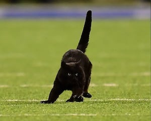 Image principale de l'article Un chat fait irruption sur un terrain de football