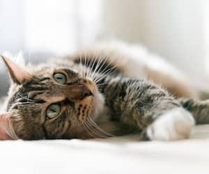 Image principale de l'article Ceux qui ont des chats seraient plus intelligents