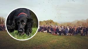 Image principale de l'article 350 personnes pour sa dernière balade au parc