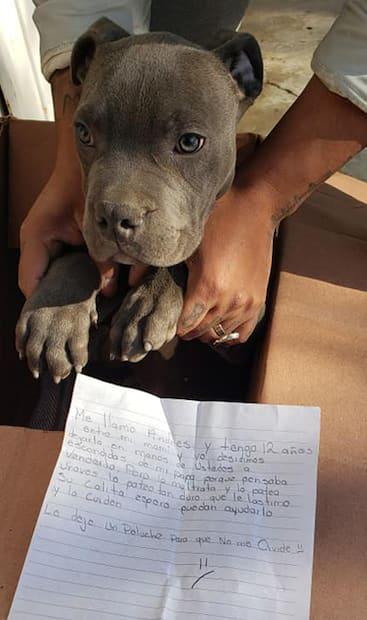 Image principale de l'article Père violent: un ado laisse son chien à un refuge