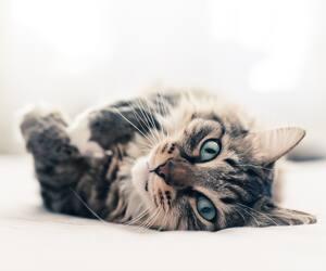 Image principale de l'article La couleur de votre chat est révélateur