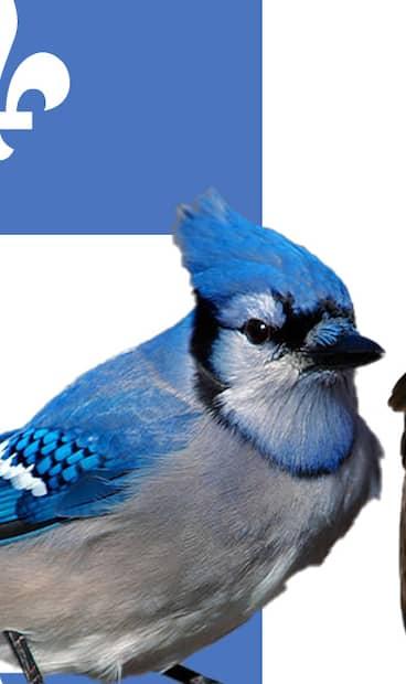 Image principale de l'article Le grand jeu des oiseaux du Québec