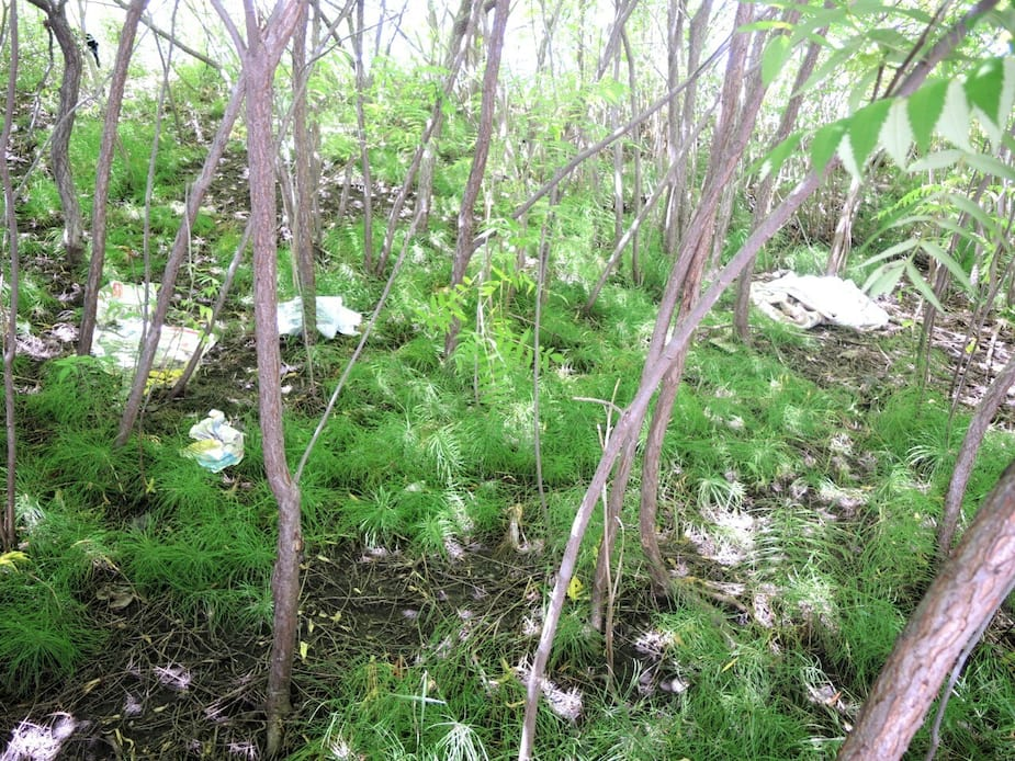 Des citoyens de Griffintown en ont marre de voir des déchets et de la malpropreté sur les terrains en friche du CN.
