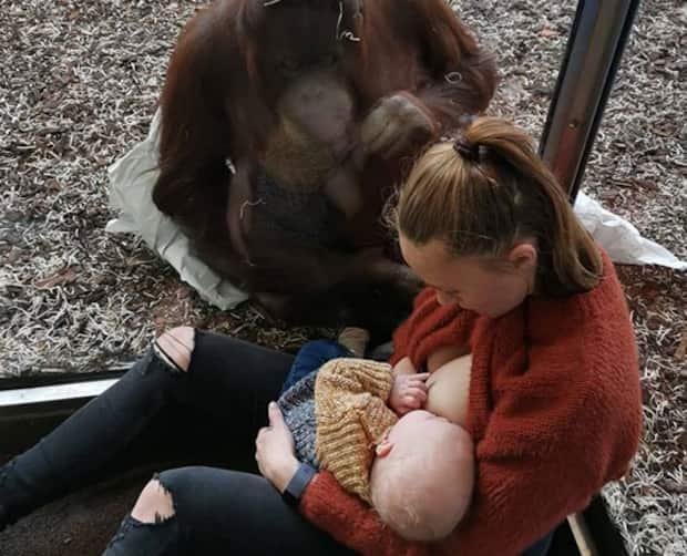 Image principale de l'article Elle vit un moment touchant avec un orang-outan