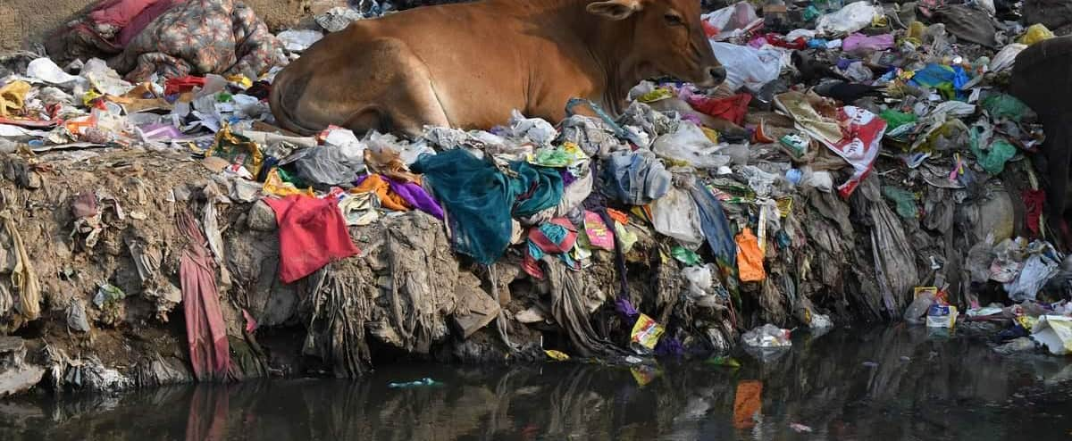 India: nails, balls, plastics … 71 kg of waste in the stomach of a stray cow  | Today24 News English