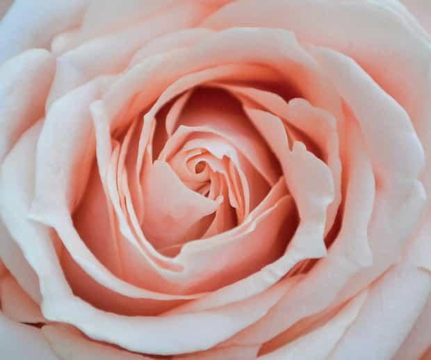 Image principale de l'article 5 gestes pour prendre soin de sa flore vaginale