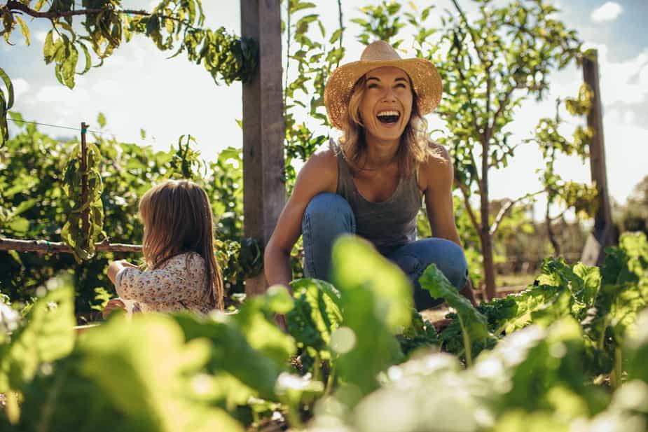 Image principale de l'article 7 fruits et légumes qui poussent en pots