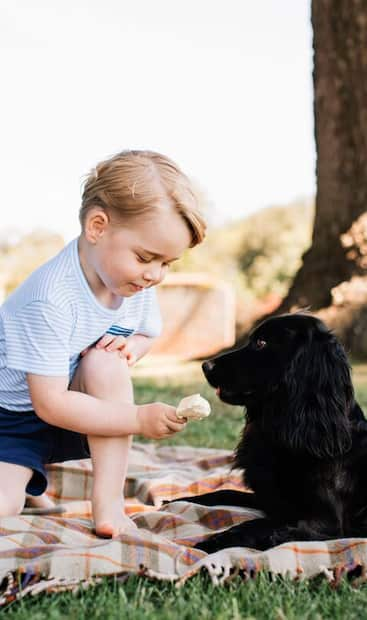 Image principale de l'article Le chien du prince William et de Kate est mort