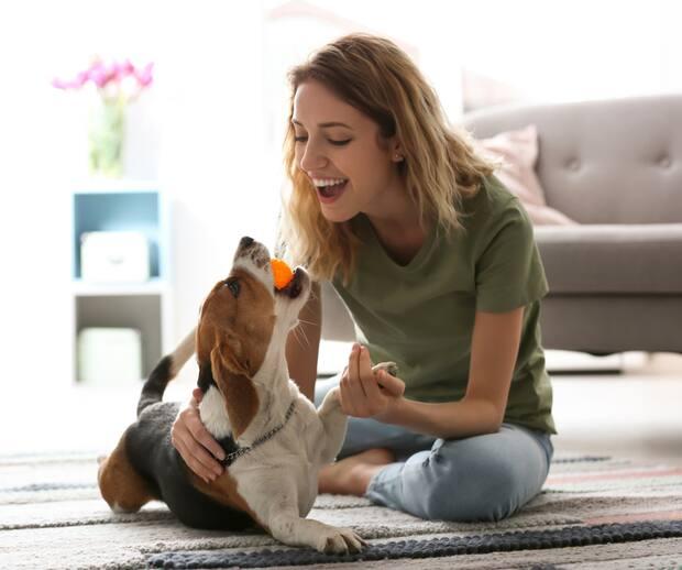 Image principale de l'article 5 jeux pour stimuler votre chien