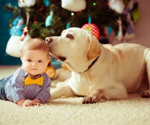 Image principale de l'article Préparer son animal à l'arrivée d'un bébé
