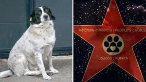 Image principale de l'article Un chien récompensé pour ses bonnes actions