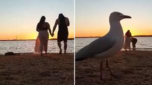 Image principale de l'article Une mouette gâche une vidéo romantique