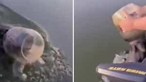 Image principale de l'article [VIDÉO] Ils aident un ours avec un pot sur la tête