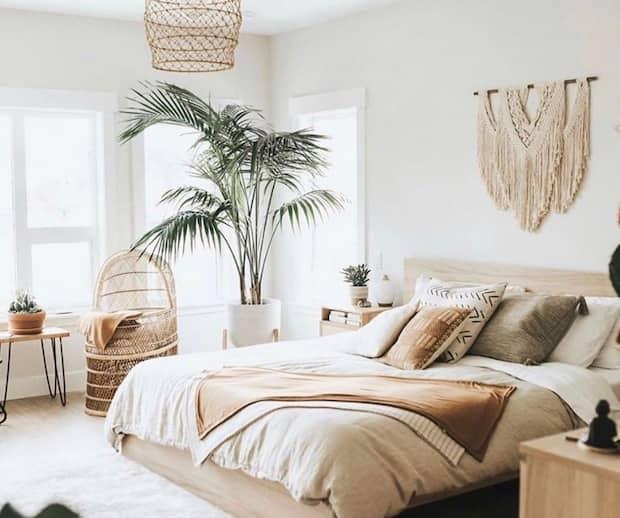 Image principale de l'article Comment entretenir son palmier toute l'année ?
