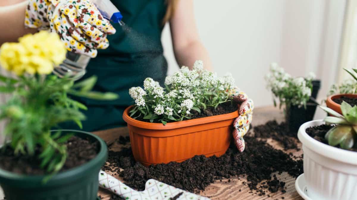 Comment Entretenir Une Plante Aloe Vera 10 plantes d'intérieur parfaites pour ceux qui n'ont pas le