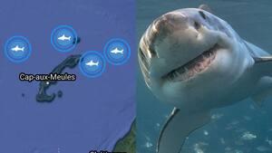 Image principale de l'article 4 requins encerclent les îles de la Madeleine