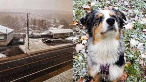 Image principale de l'article Voyez des photos du Québec sous la neige d'octobre