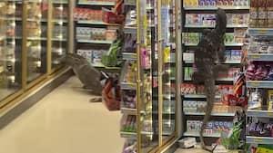 Image principale de l'article Un lézard géant fout le bordel dans un dépanneur
