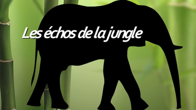 Les échos de la jungle