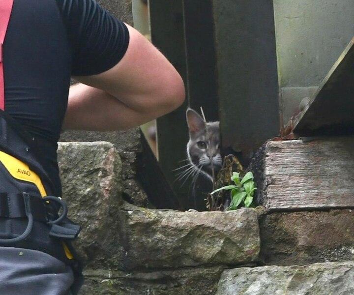 «Coincé» sur un pont, un chat mobilise une équipe de sauvetage pendant cinq heures avant de finalement retourner par lui-même à la maison