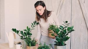 5 plantes à se procurer pour réduire l'anxiété