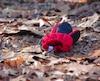 Lost Mitten, par Katie Schumaker, https://bbschoes.deviantart.com/art/Lost-mitten-350935299