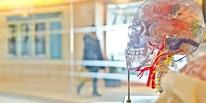 Les impacts d'une commotion cérébrale
