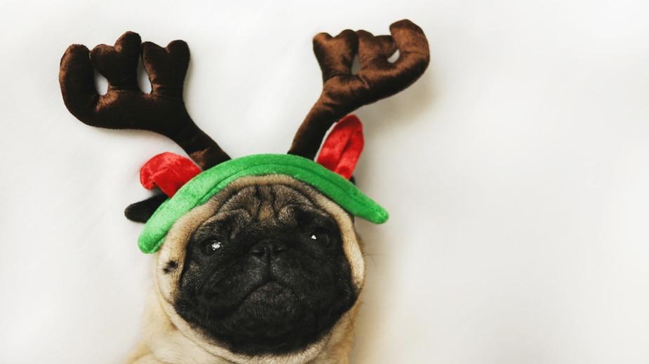 10 idées-cadeaux pour vos animaux de compagnie