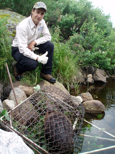 Les piégeurs ont toujours eu un rôle majeur à jouer pour assurer une bonne gestion des animaux à fourrure.