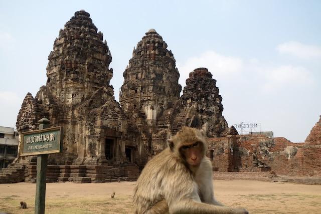 Le Temple des singes sacrés Lopburi.