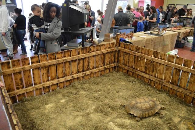 Un parc à tortues