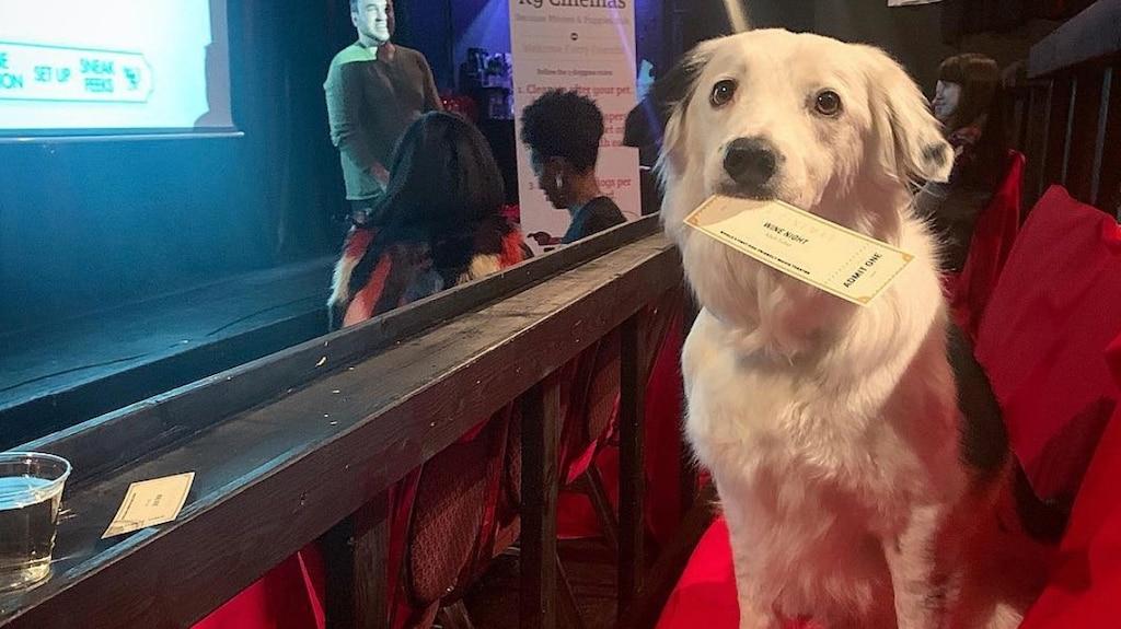 Un cinéma du Texas accepte les chiens et offre du vin illimité pour 20$