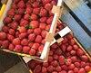 Les fraises du Québec