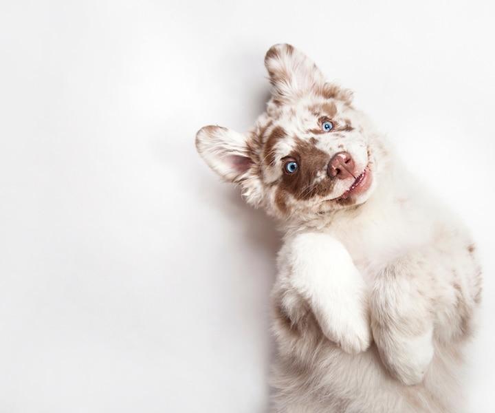 10 mythes sur les chiens
