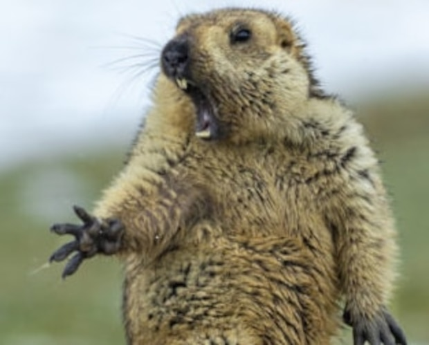 Image principale de l'article Voici la plus belle photo animalière de l'année