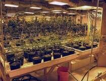 Cannabis Colorado