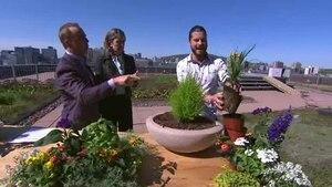 Comment faire un jardin en pot!